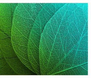 a gráfica e o meio ambiente folhas
